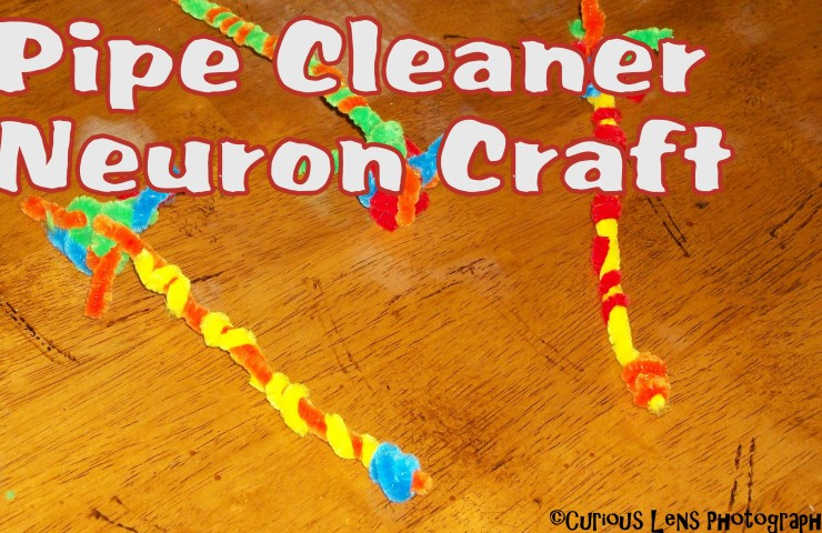 Bee Crafty Kids #25 – Pipe Cleaner Neurons