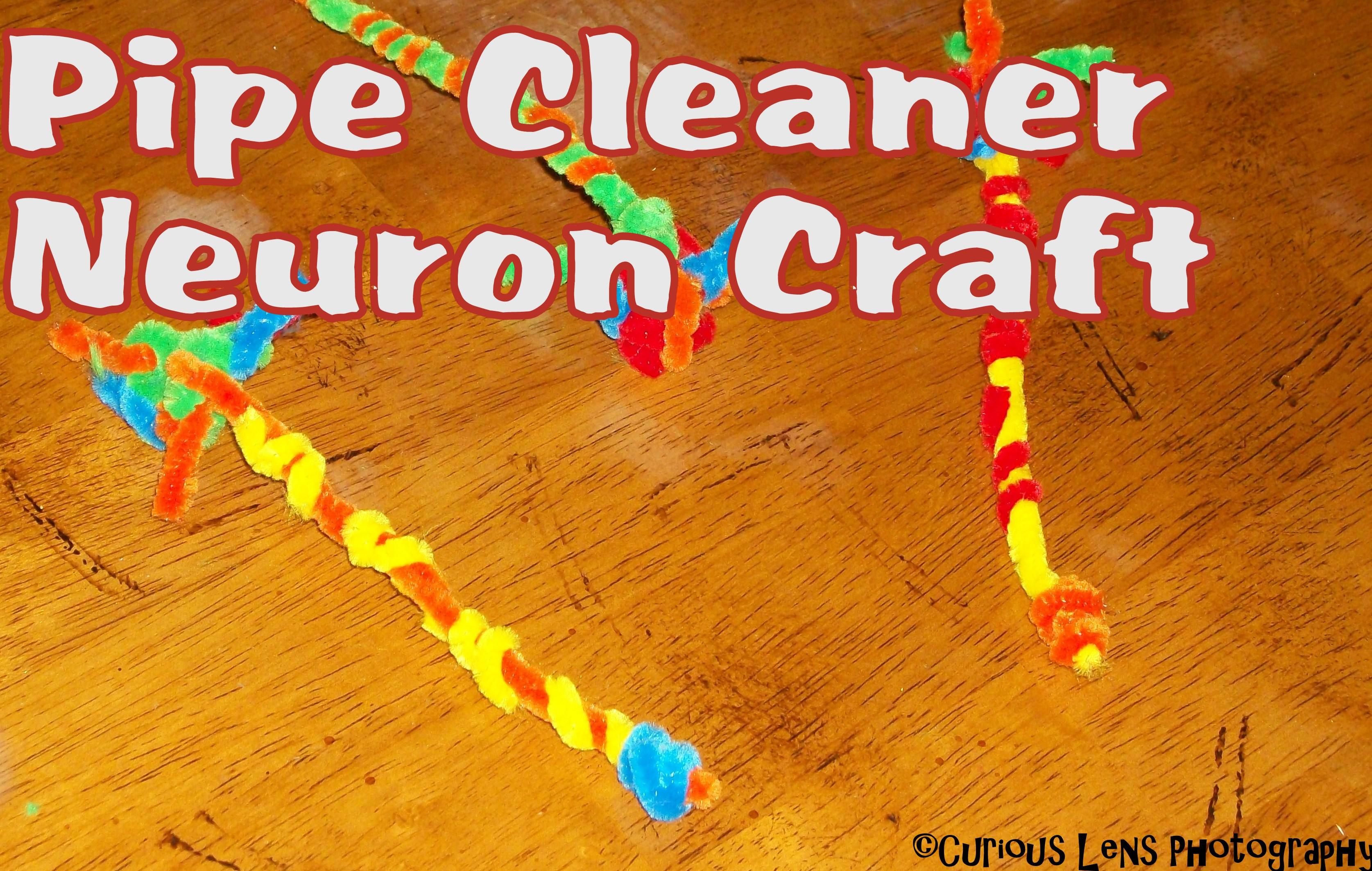 Bee Crafty Kids #25 - Pipe Cleaner Neurons - Look! We're ...