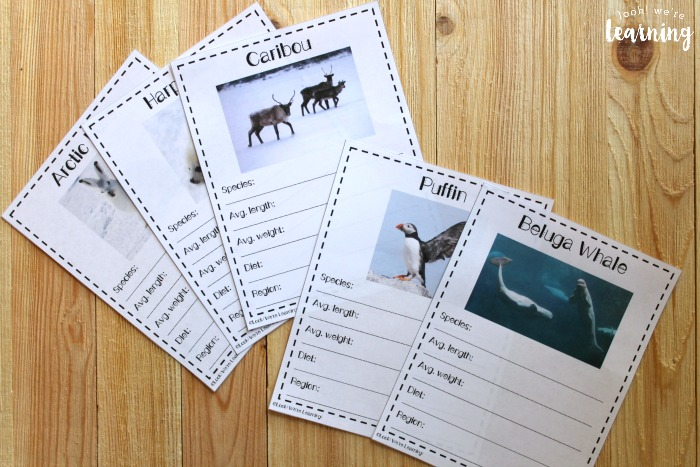 Polar Animal Fact Notebooking Pages for Kids