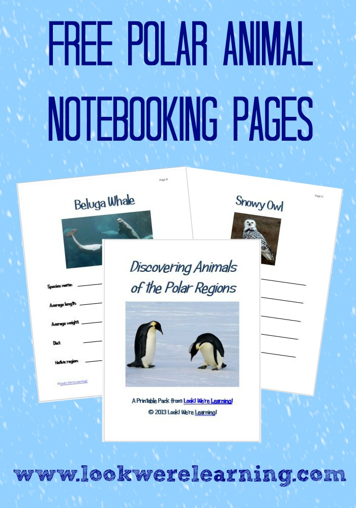 Get our free Polar Animal Notebooking Pages to use with a unit study about winter, animals, or the polar regions!