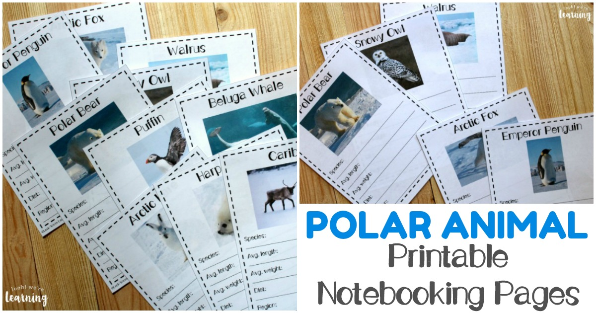 Printable Polar Animal Fact Pages for Kids