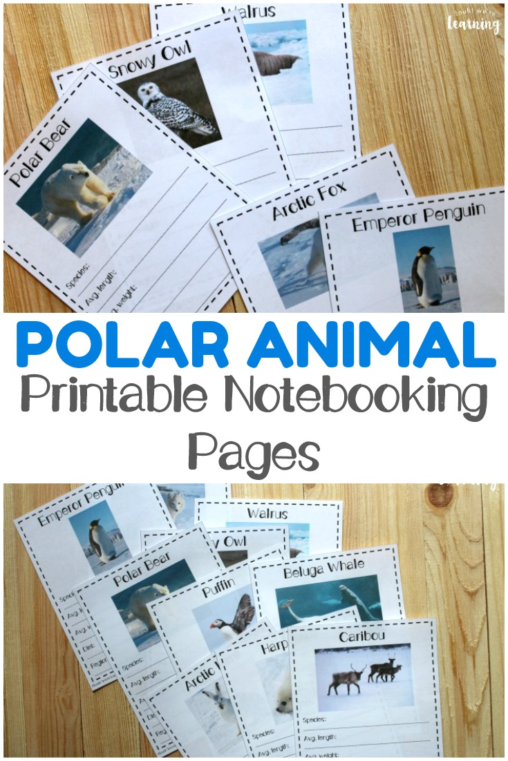 Use these printable polar animal notebooking pages to learn about winter animals and the regions where they live!