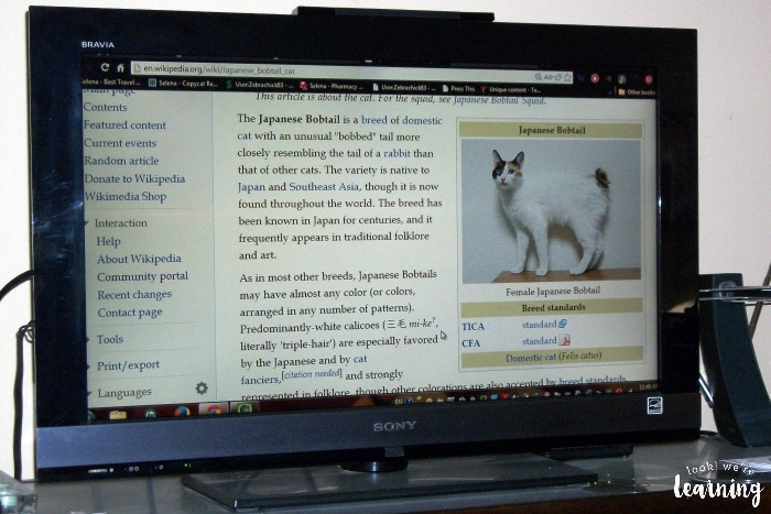 Learning About Pedigree Cats
