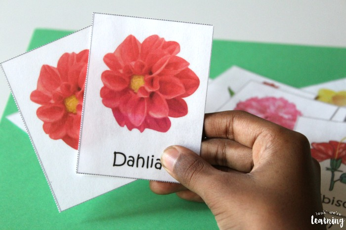 All About Flowers Flower Flashcards