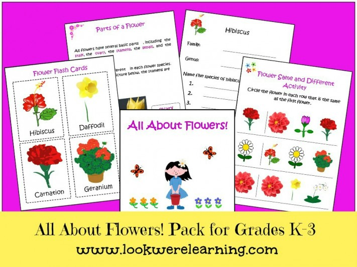 All About Flowers Flower Printables for Kids