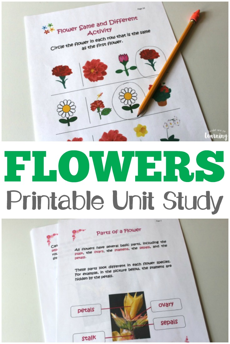 This All About Flowers printable unit study is packed with fun and educational flower printables for kids! #spring #learning #homeschooling