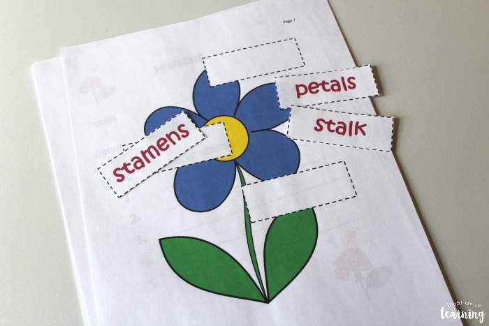 Parts of a Flower Cut and Paste Activity