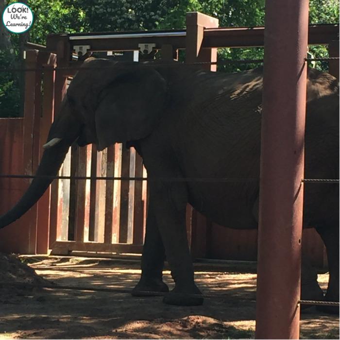 Touring Zoo Atlanta