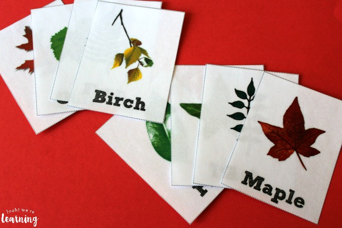 Printable Leaf Identification Flashcards