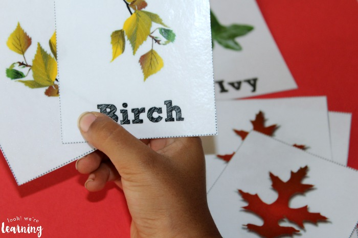 Using Leaf Identification Flashcards with Kids
