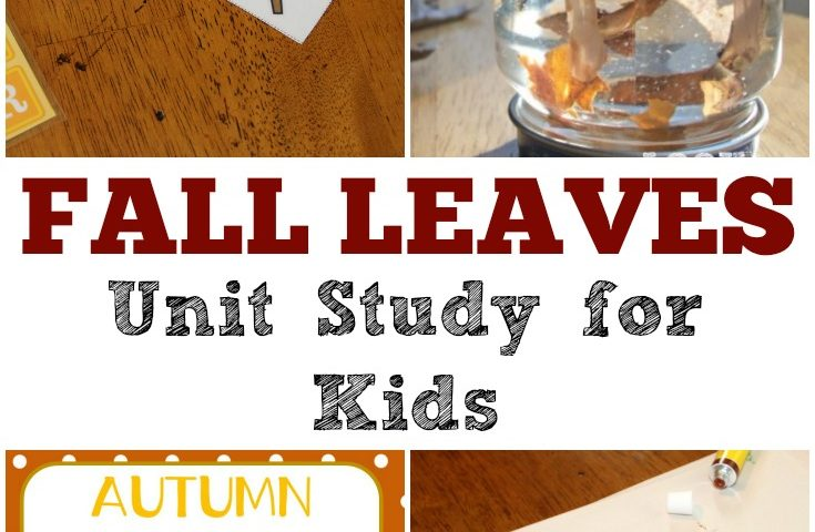 Free Homeschool Unit Studies: Fall Leaves Unit Study