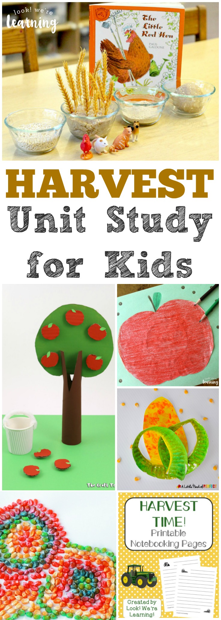 Share this fun harvest unit study to help kids learn about what happens during the harvest season!