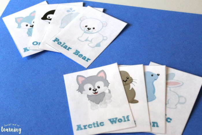 Arctic Animal Flashcards for Kids