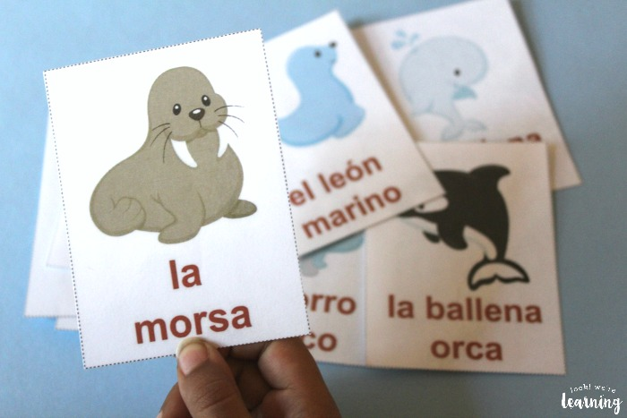 Arctic Animal Spanish Flashcards for Kids