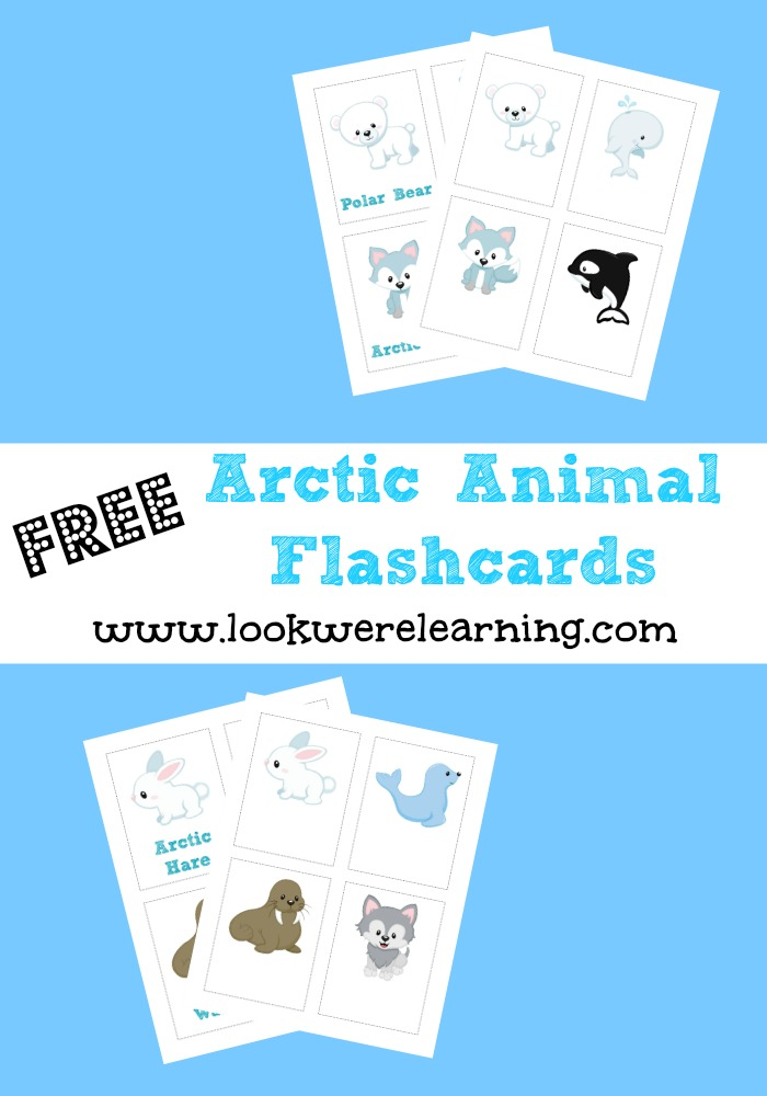 Free Arctic Animal Flash Cards - Look! We're Learning!