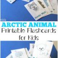 Pick up these Arctic Animal printable flashcards to help kids learn about animals that live in the Arctic region!