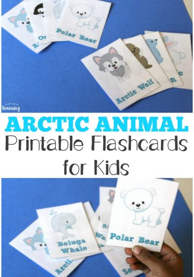 Free Printable Flashcards: Arctic Animal Flash Cards