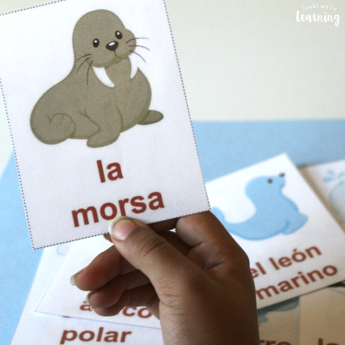 Printable Spanish Arctic Animal Flashcards for Kids