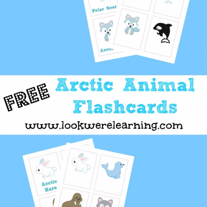 Free Arctic Animal Flashcards - Look! We're Learning!