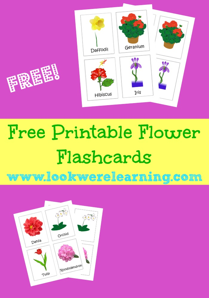 Grab our free printable flower flashcards and get great spring learning ideas for kids!