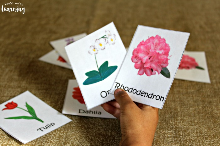 Learning about flowers with printable flower flashcards