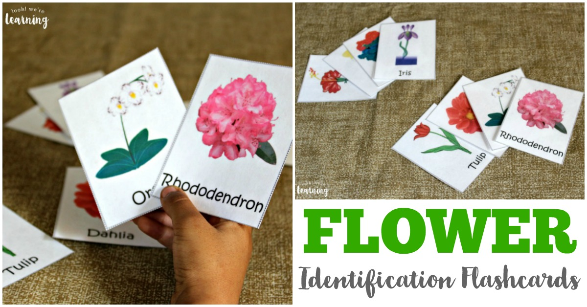 Printable Flower Identification Flashcards for Kids