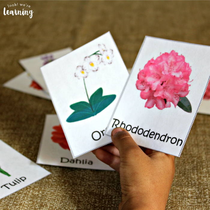 Printable Flower Identification Flashcards