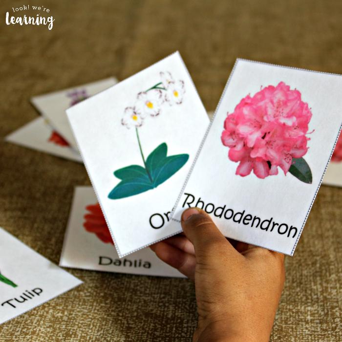 Printable Flower Identification Flashcards