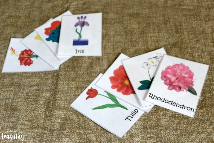 Studying flower species with printable flower flashcards