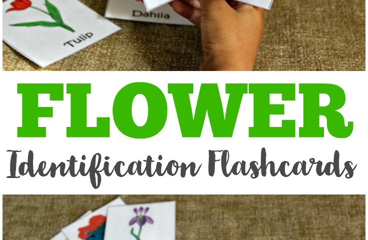 Free Printable Flashcards: Free Printable Flower Flashcards