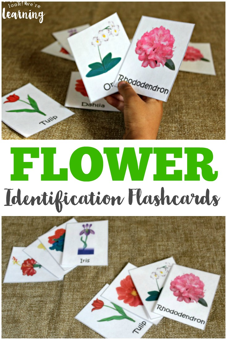 These free flower identification cards are great for little budding gardeners or for an outdoor nature walk!