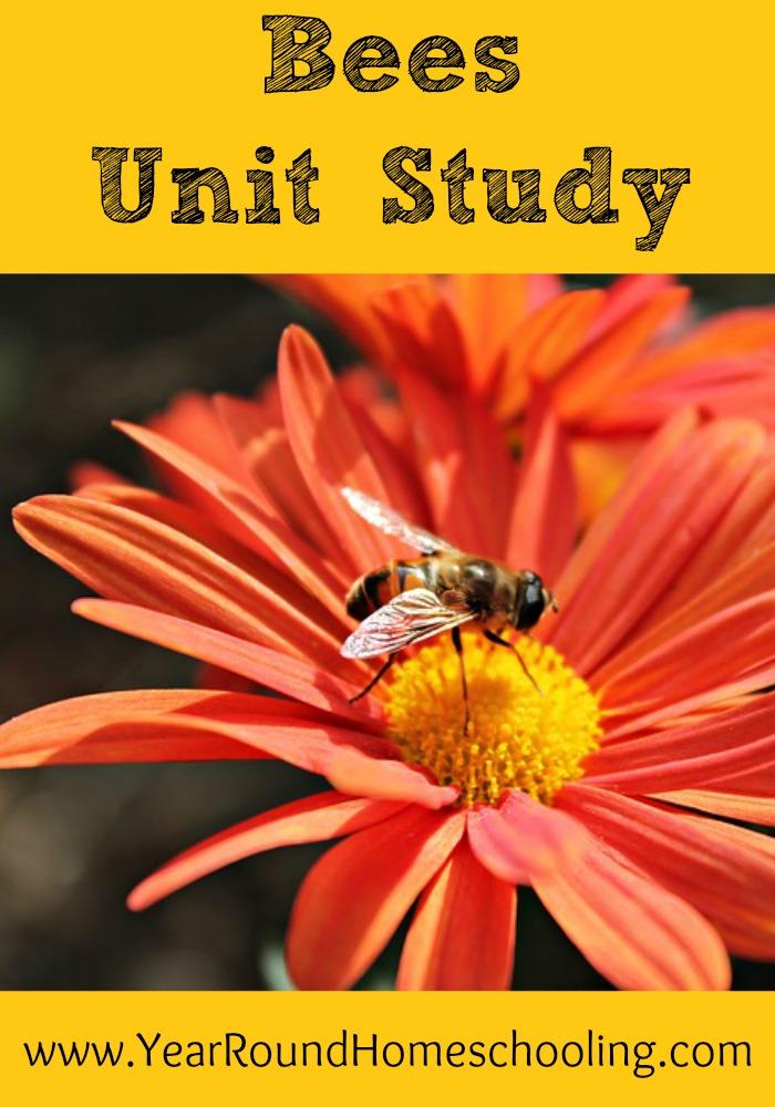 Bees Unit Study