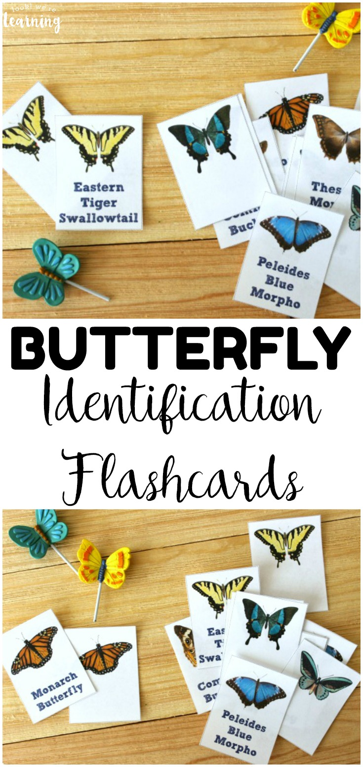 Butterflies are all around us! Learn about common species in your neighborhood with these printable butterfly identification cards for kids!