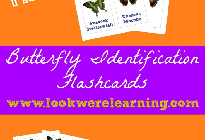 Free Printable Flashcards: Butterfly Identification Cards