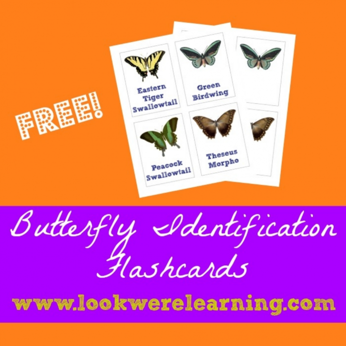 Butterfly Identification Cards - Look! We're Learning!
