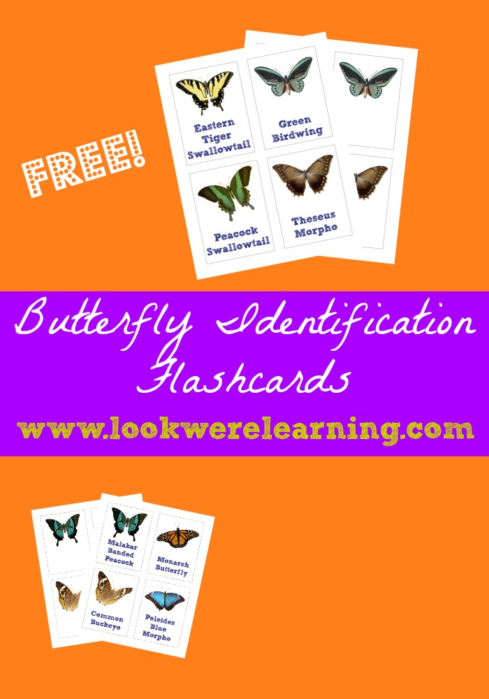 Butterfly Identification Cards
