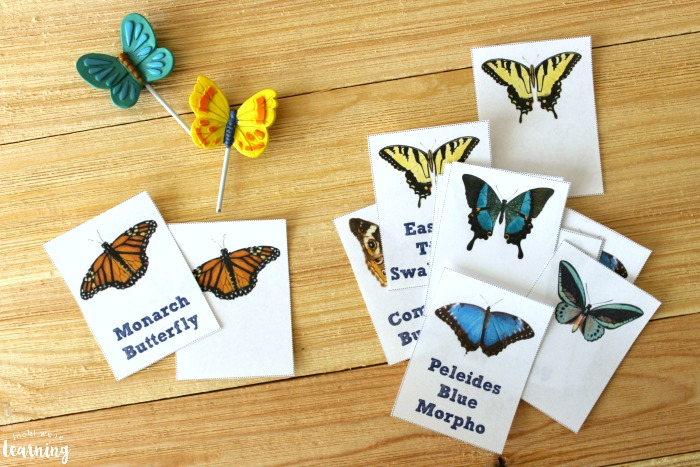 Butterfly Identification Flashcards for Kids