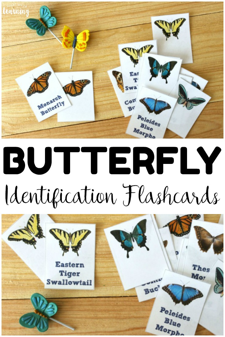Learn about the common butterfly species we see each year with these printable butterfly identification cards! Wonderful for a spring or summer nature walk in the garden!