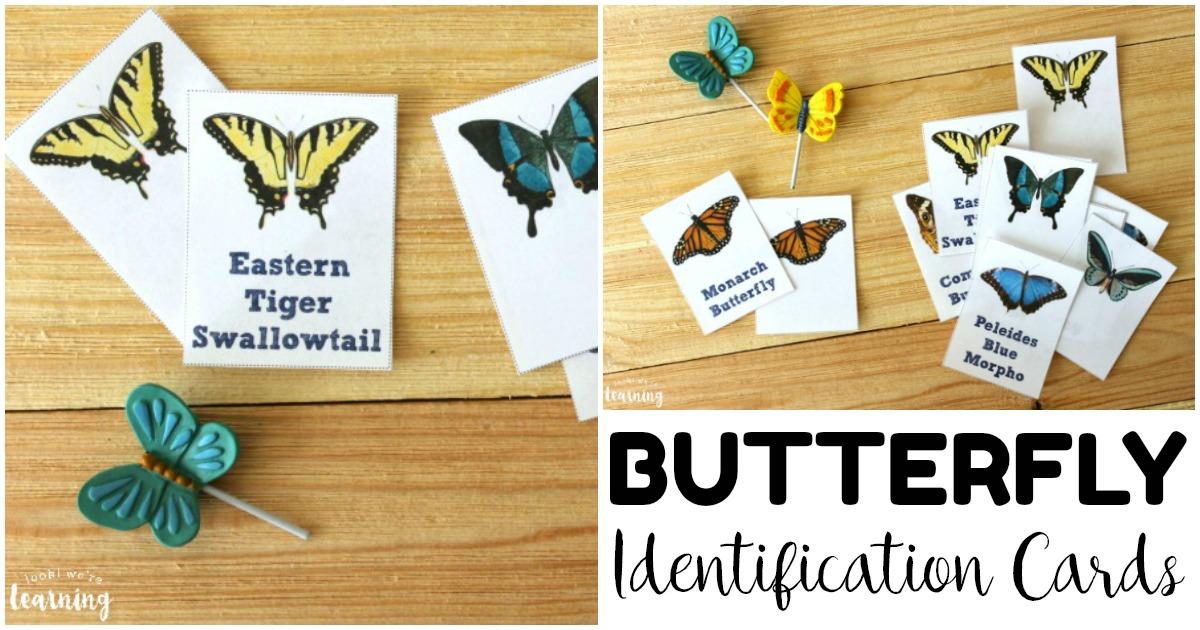 Printable Butterfly Identification Flashcards for Kids