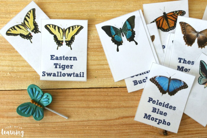 Printable Butterfly Identification Flashcards for Science