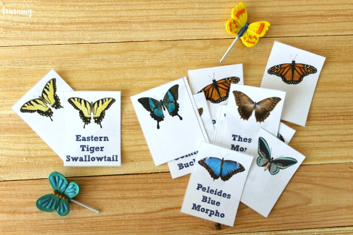 Printable Butterfly Identification Flashcards
