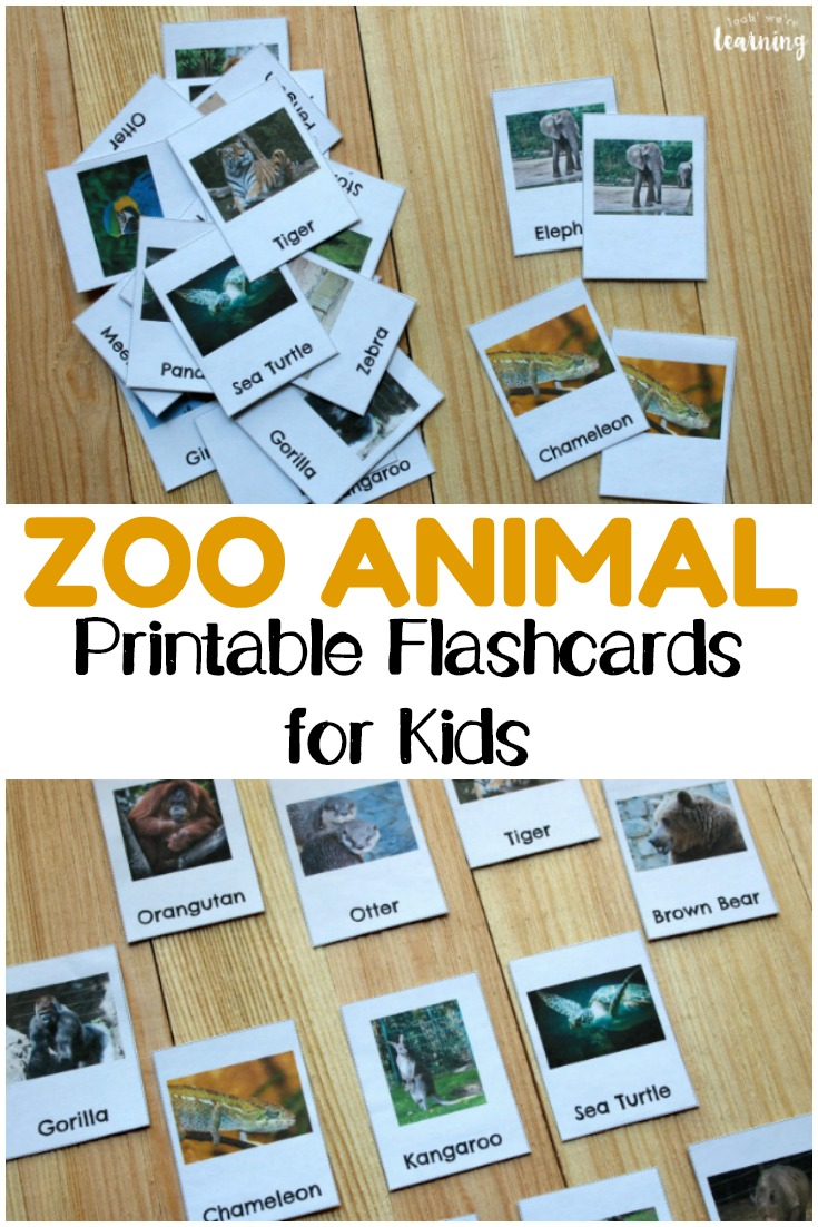 Help early learners get to know some of the wild creatures who live at the zoo with these printable zoo animal flashcards for kids!