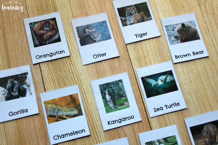 Printable Preschool Zoo Animal Flashcards