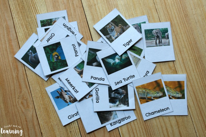 Zoo Animal Flashcards for Kids