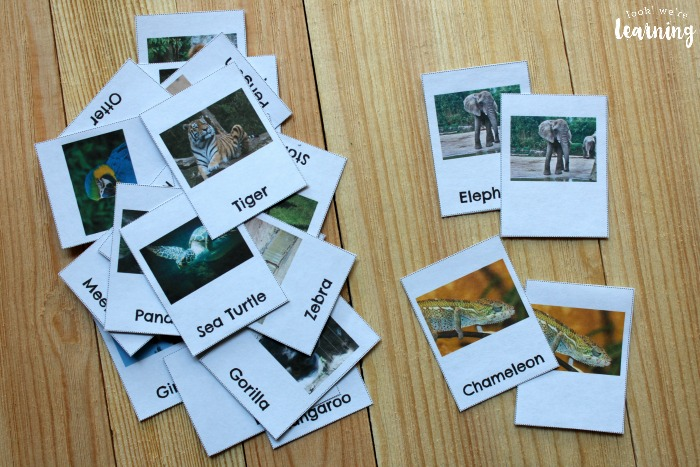 Zoo Animal Flashcards for Preschoolers
