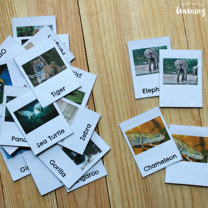 Zoo Animal Flashcards