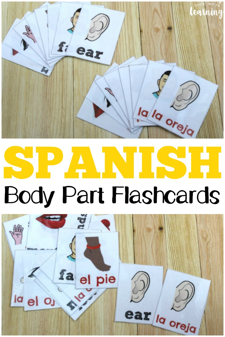 Practice talking about the parts of the body in Spanish with these Spanish parts of the body flashcards!