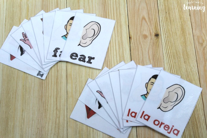 Printable Spanish Body Part Flashcards