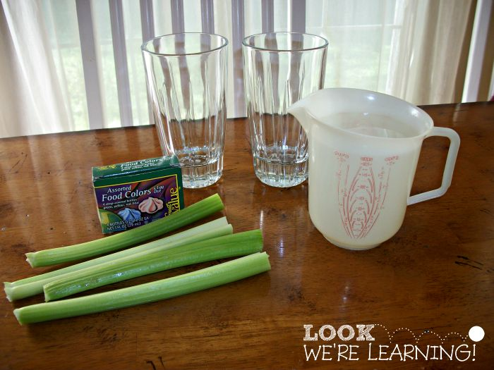 Simple Science Experiments - Colorful Celery