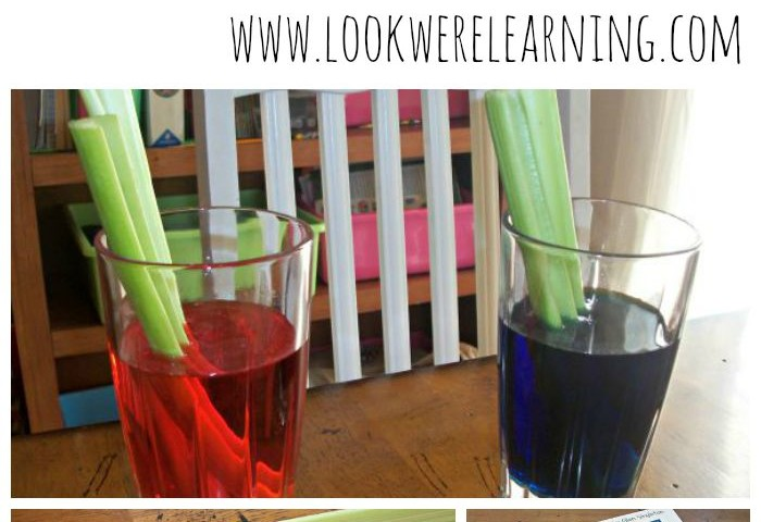 Simple Science Experiments: Colorful Celery